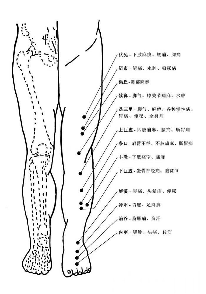 人体腿部正面穴位图