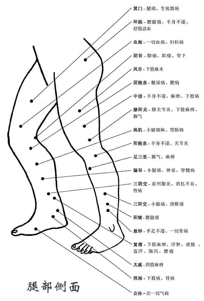 人体腿部侧面穴位图