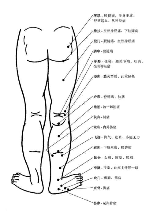 人体腿部背面穴位图