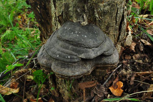 催泪弹与假灵芝,采蘑菇的奇遇